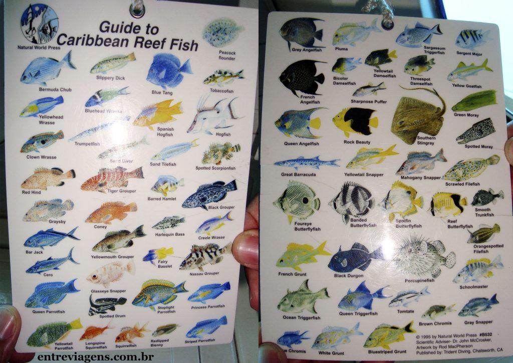 Aruba-guia-de-peixes
