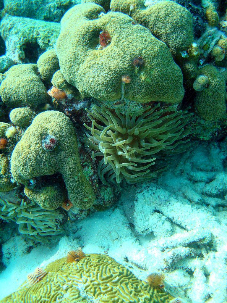 snorkeling-em-Curaçao